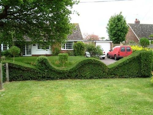 Gợi ý trang trí vườn xinh bằng cây cảnh nghệ thuật 3