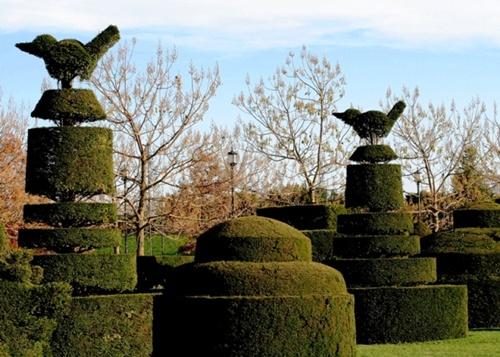 Gợi ý trang trí vườn xinh bằng cây cảnh nghệ thuật 14