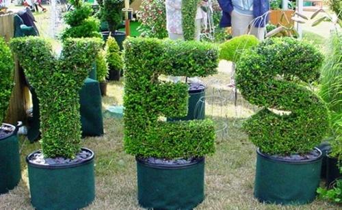 Gợi ý trang trí vườn xinh bằng cây cảnh nghệ thuật 8