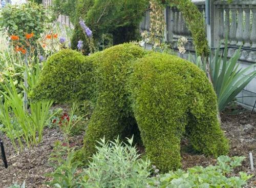 Gợi ý trang trí vườn xinh bằng cây cảnh nghệ thuật 7