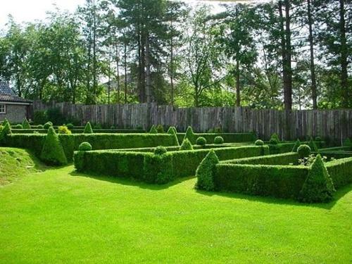 Gợi ý trang trí vườn xinh bằng cây cảnh nghệ thuật 1