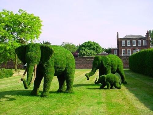 Gợi ý trang trí vườn xinh bằng cây cảnh nghệ thuật 5