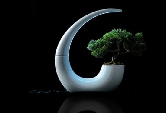 3 mẫu chậu cây cảnh giúp nhà bạn ấn tượng hơn  14