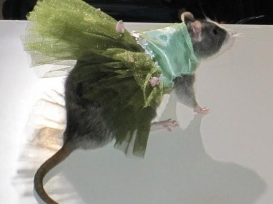 Những người yêu chuột một cách kỳ quặc 3