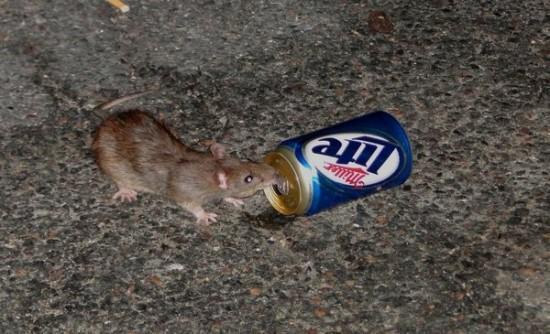 Những người yêu chuột một cách kỳ quặc 6