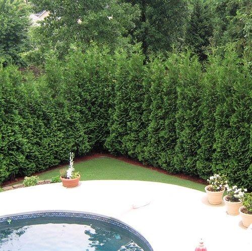 4 cách hay để sân vườn vừa mát vừa riêng tư 8