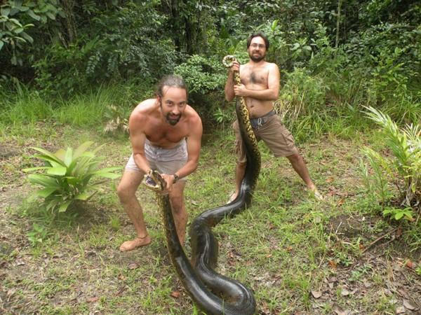 Bắt sống trăn khổng lồ dài 5,2m, nặng 79kg 2