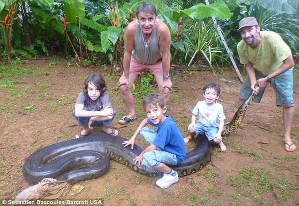 Bắt sống trăn khổng lồ dài 5,2m, nặng 79kg 5
