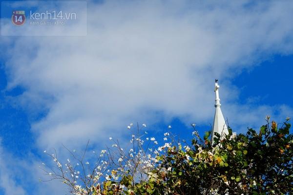 Chùm ảnh: Ngắm mùa hoa ban, hoa cải trắng đẹp mê mẩn ở Đà Lạt 8