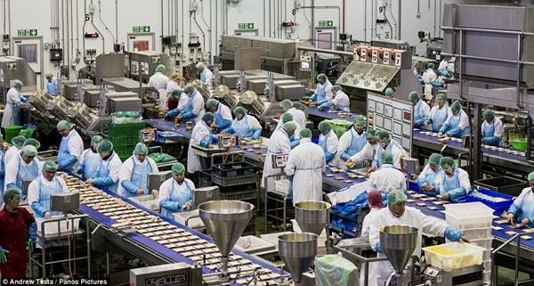 Cận cảnh nhà máy sản xuất sandwich lớn nhất nước Anh_1