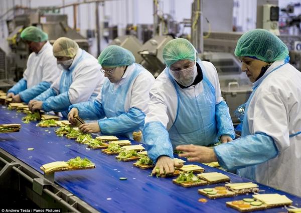 Cận cảnh nhà máy sản xuất sandwich lớn nhất nước Anh_2