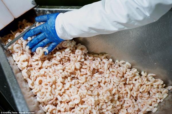 Cận cảnh nhà máy sản xuất sandwich lớn nhất nước Anh_8