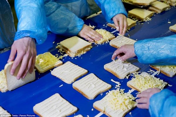 Cận cảnh nhà máy sản xuất sandwich lớn nhất nước Anh_9