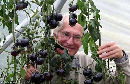 Cà chua đen có khả năng chống ung thư 1