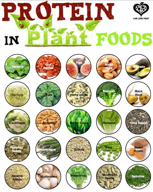8 nguồn protein thực vật tuyệt vời mà bạn không nên bỏ qua 1