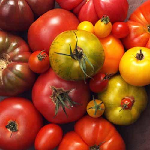 5 thực phẩm hàng đầu tốt cho cơ thể  5
