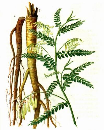 Các loại thảo mộc có tác dụng trị mụn rộp herpes 2