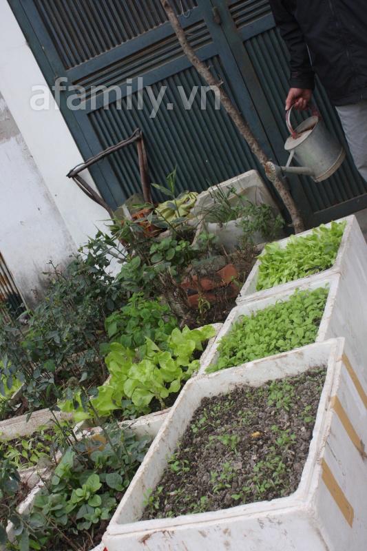 Hà Nội rộ mốt trồng rau sạch tại gia 16