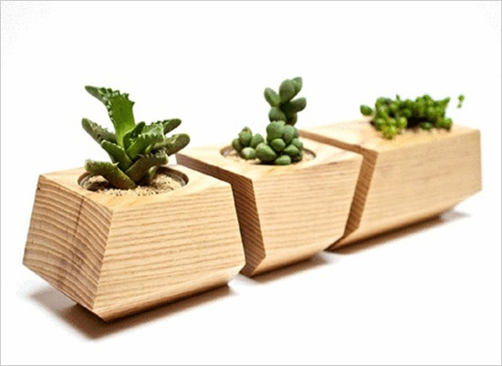 3 mẫu chậu cây cảnh giúp nhà bạn ấn tượng hơn  1