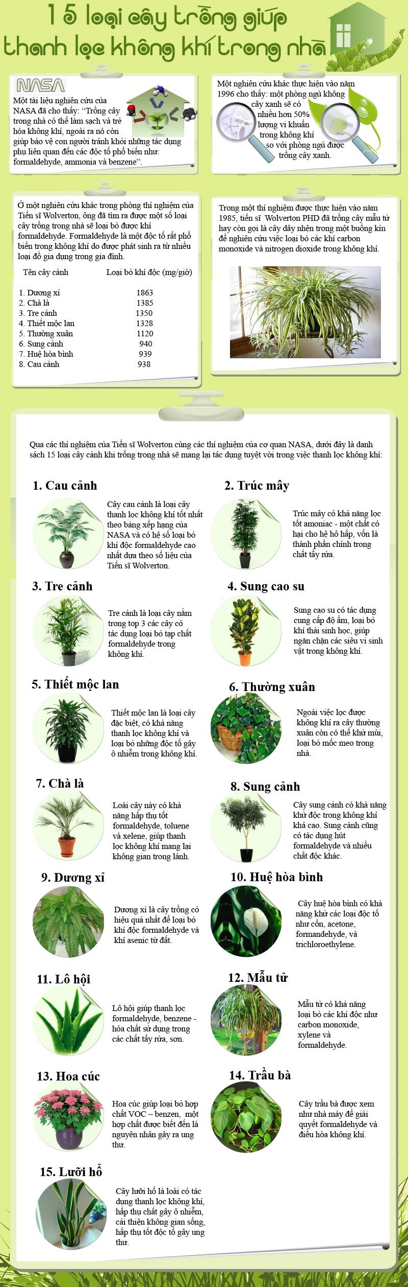cây làm sạch không khí