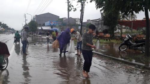 Nghệ An: Mưa lớn, học sinh nghỉ học, dân mang vợt ra bắt cá