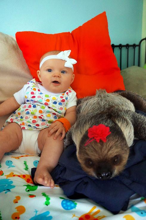 Bộ ảnh đáng yêu về tình bạn của cô bé 5 tháng tuổi và chú thú lười  13