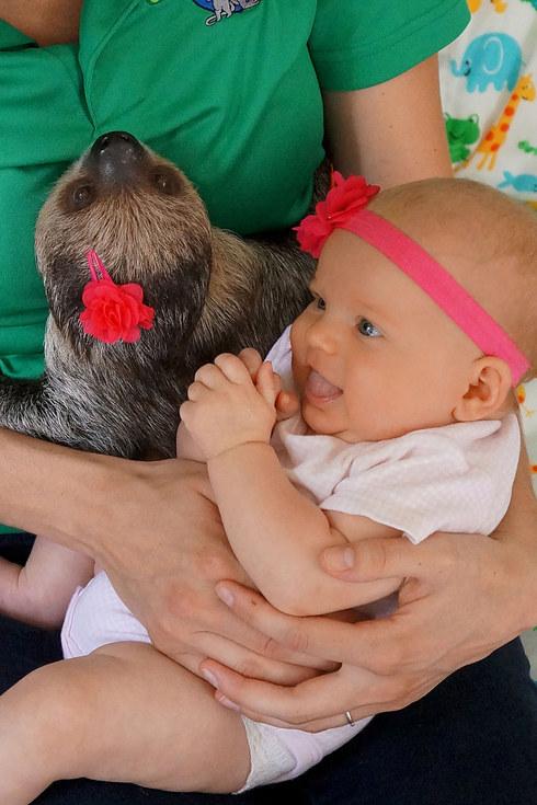 Bộ ảnh đáng yêu về tình bạn của cô bé 5 tháng tuổi và chú thú lười  5
