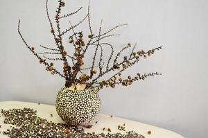 2 cách F5 lọ hoa ấn tượng với cành cây khô  3