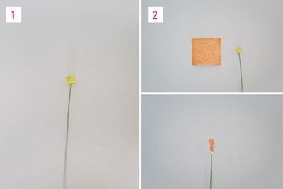 Cách làm hoa giả từ giấy nhún cực đẹp mà dễ 6