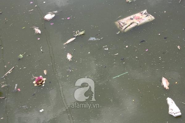 Quá ô nhiễm, cá chết hàng loạt dưới kênh Nhiêu Lộc 1