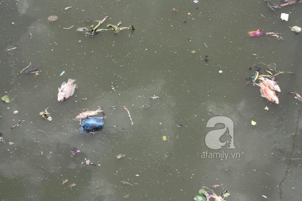 Quá ô nhiễm, cá chết hàng loạt dưới kênh Nhiêu Lộc 2