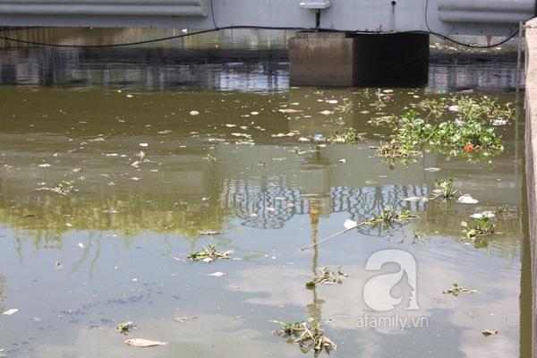 Quá ô nhiễm, cá chết hàng loạt dưới kênh Nhiêu Lộc 4