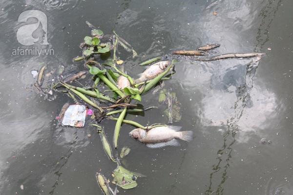 Quá ô nhiễm, cá chết hàng loạt dưới kênh Nhiêu Lộc 7