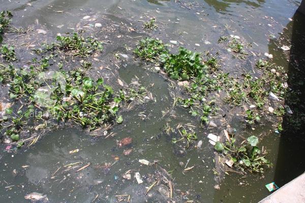 Quá ô nhiễm, cá chết hàng loạt dưới kênh Nhiêu Lộc 8