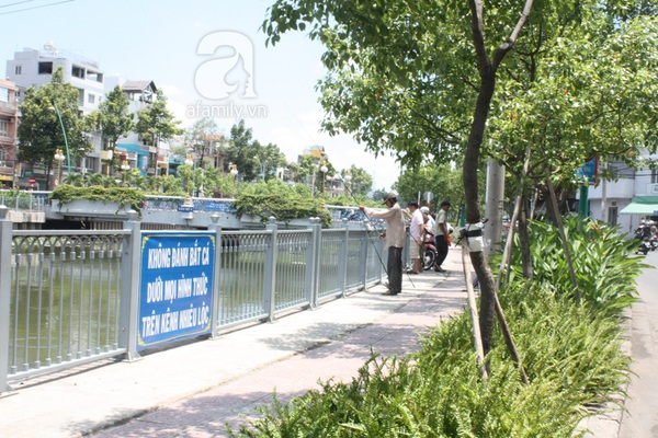 Quá ô nhiễm, cá chết hàng loạt dưới kênh Nhiêu Lộc 11
