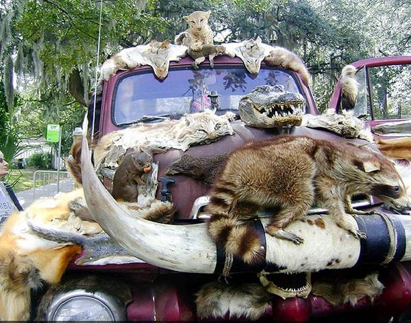 Hãi hùng chiếc xe trang trí bằng xác động vật 1