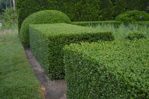 Trang trí sân vườn bằng những mẫu tỉa cây cảnh đẹp 1