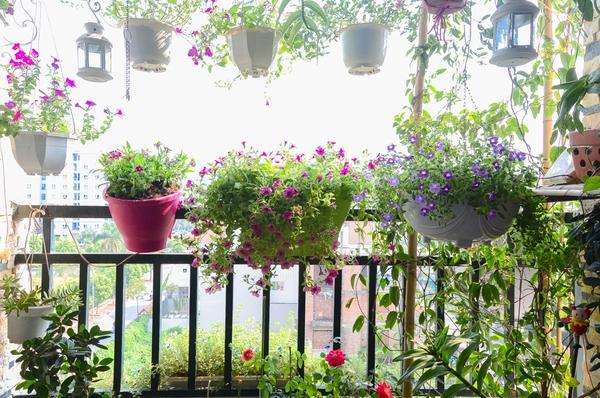 Ngắm căn hộ có góc vườn truyền cảm hứng cho cả khu chung cư ở Hà Nội 6