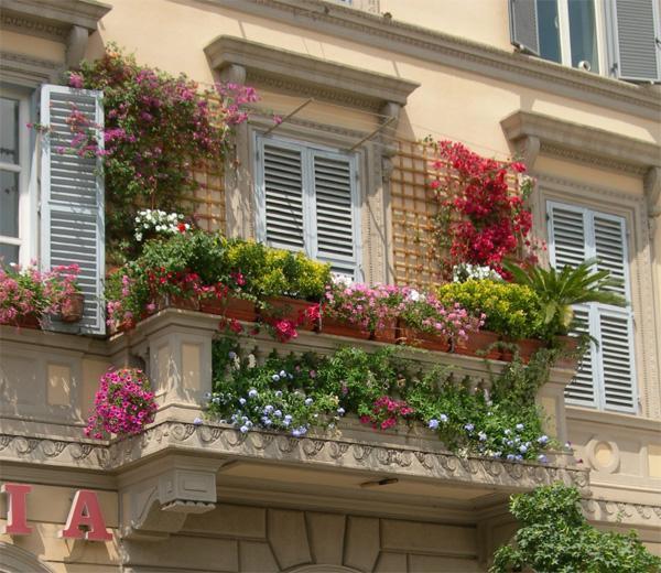 Những giống cây hoa thích hợp để làm giàn leo trước nhà 2