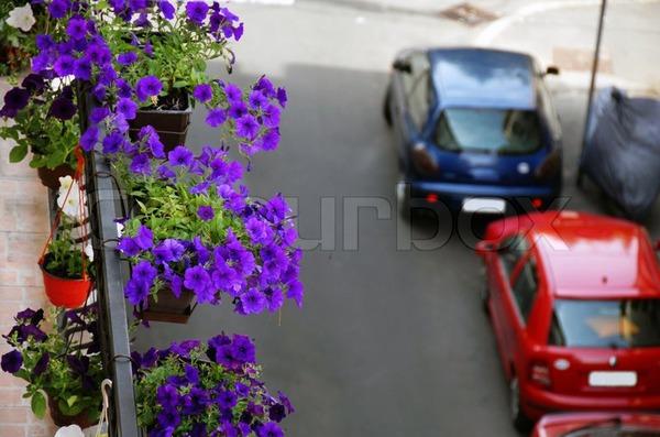 Trồng hoa dạ yến thảo che khuyết điểm cho ban-công cũ 7