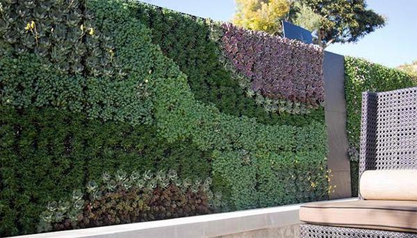 Những bức tường xanh mướt