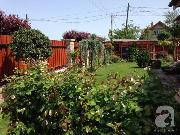 Ghé thăm khu vườn đậm chất Việt trên đất Hungary 2