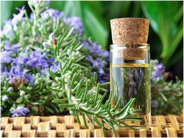 Trồng cây hương thảo trong chậu trang trí nhà đón Tết 2
