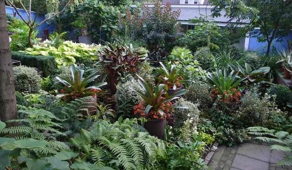 10 bước để sở hữu khu vườn nhiệt đới đầy sức sống 5