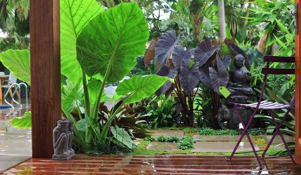 10 bước để sở hữu khu vườn nhiệt đới đầy sức sống 6