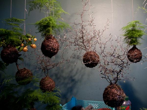 Ý tưởng làm vườn treo cực đơn giản 1