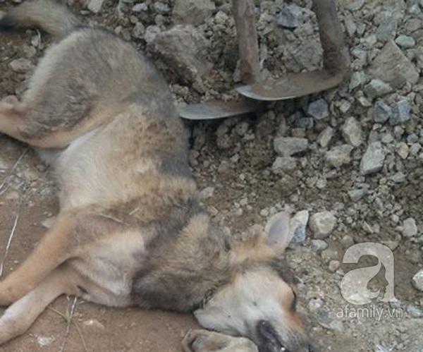 Thanh Hóa: 200 người truy sát đến cùng tên trộm chó 3