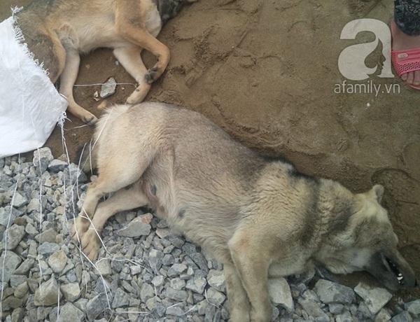Thanh Hóa: 200 người truy sát đến cùng tên trộm chó 6