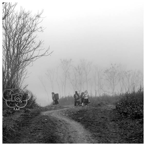 Mộc Châu mùa sương phủ  1