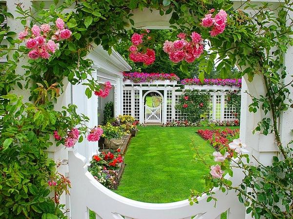 trồng hồng leo trước cổng nhà 8